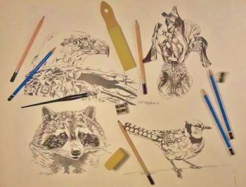 DRAWING FOR ADULTS- Drop in WEDNESDAYS