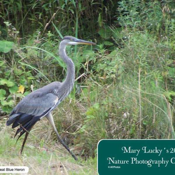 2017 Nature Photography Calendar by Mary Lucky